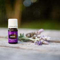 web-lavender-3-1